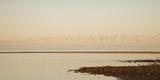 Shore, Alnmouth, Northumberland, England Reproduction photographique par  Design Pics Inc