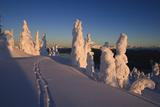 Scenic Sunrise in Winter with Ski Tracks in the Foreground, Wrangell Island, Southeast Alaska Fotografisk trykk av  Design Pics Inc