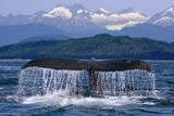 Humpback Whale Tail on Surface Just before Diving Inside Passage Alaska Southeast Summer Lámina fotográfica por  Design Pics Inc