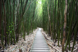 Hawaii, Maui, Kipahulu, Haleakala National Park, Trail Through Bamboo Forest on the Pipiwai Trail Premium fotografisk trykk av  Design Pics Inc