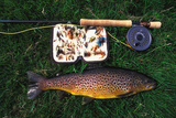 Wild Brown Trout and Fishing Rod Fotografisk tryk af  Design Pics Inc