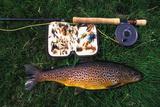 Wild Brown Trout and Fishing Rod Impressão fotográfica por  Design Pics Inc