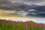 Field of Fireweed on Hill Overlooking Kachemak Bay and Grewingk Glacier Reproduction photographique par  Design Pics Inc