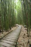 Hawaii, Maui, Kipahulu, Haleakala National Park, Trail Through Bamboo Forest on the Pipiwai Trail Fotografisk tryk af  Design Pics Inc