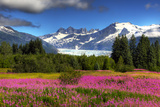 View of the Mendenhall Glacier with a Field of Fireweed in the Foreground, Southeast, Alaska Summer Reproduction photographique par  Design Pics Inc