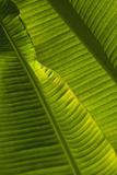 Detail of Palm Tree; Barbados Fotografisk tryk af  Design Pics Inc