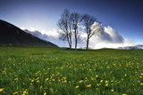 Meadow with Yellow Dandelions, Gap, France Photographic Print by Keith Ladzinski