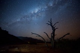 A Tree under a Starry Sky, with the Milky Way in the Namib Desert, Namibia Fotografisk tryk af Alex Saberi