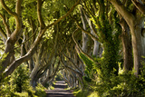 The Reputedly 300 Year Old Beech Trees, the Dark Hedges in Stranocum Fotografisk tryk af Chris Hill