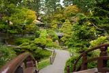 Bridges Link the Paths in the Japanese Tea Garden, the Oldest Public U.S. Japanese Garden Fotografisk trykk av Krista Rossow