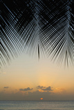 Looking Through Palm Trees to Sunset on the West Coast of Barbados; Barbados Reproduction photographique par  Design Pics Inc
