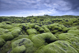 Moss-Covered Lava Field in Vik, Iceland Fotografisk tryk af Keith Ladzinski