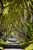 The Reputedly 300 Year Old Beech Trees, the Dark Hedges in Stranocum Impressão fotográfica por Chris Hill