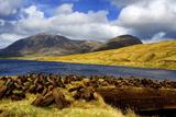 Cut Turf at Lough Inagh in Connemara, Ireland 写真プリント : クリス・ヒル