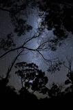 Night Sky and Tree Silhouettes, Grampians National Park, Australia Fotografisk tryk af Keith Ladzinski