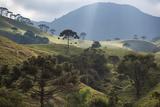 View of Farmland at Sunset in Sao Francisco Xavier Region Impressão fotográfica por Alex Saberi