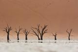 The Dead Acacia Trees of Deadvlei with a Heat Reflection Impressão fotográfica por Alex Saberi
