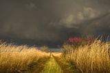 A Colorful Rural Road Leads Toward a Storm Fotografie-Druck von Jim Reed
