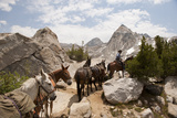 A Horse and Rider Lead a String of Pack Animals in King's Canyon National Park, California, USA Fotografisk tryk af Joel Sartore