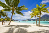 Palm Trees and their Shadows on Bora Bora's White Sand Beaches Photographic Print by Mike Theiss
