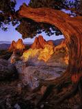 A Juniper Frames South Gateway Rock in Garden of the Gods, Colorado Fotografisk tryk af Keith Ladzinski