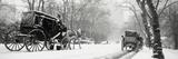Central Park in Falling Snow Fotografisk trykk av  Design Pics Inc