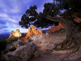 A Juniper Frames South Gateway Rock in Garden of the Gods, Colorado 写真プリント : Keith Ladzinski