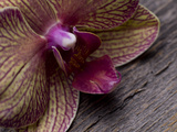 An Orchid Close Up on a Barn Wood Background Photographic Print by Rebecca Hale