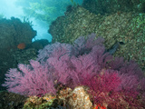 A Coral Formation Photographic Print by Cesare Naldi