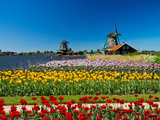 Windmill in Holland Photographic Print by  lucasantilli