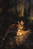 Florida Panther (Felis Concolor) Fotografisk tryk af Lynn M. Stone