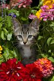 Kitten in Flowers, Sarasota, Florida, USA Stampa fotografica di Lynn M. Stone