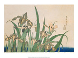 Irises and Grasshopper Posters af Katsushika Hokusai