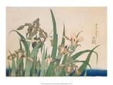 Irises and Grasshopper Poster von Katsushika Hokusai