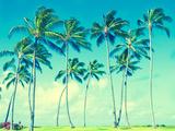 Coconut Palm Trees in Hawaii (Vintage Style) Premium fototryk af  EllenSmile