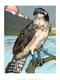 Bird Illustration, The Osprey, 1899 Posters par Edward Detmold