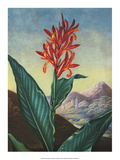 Botanical Print, Indian Reed Prints by Peter Charles Henderson