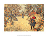 Gathering Apples, 1904 Póster por Carl Larsson