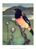 Bird Illustration, The Oriole, 1899 Affiches par Edward Detmold