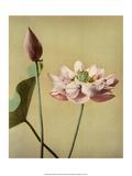 Lotus Flower, Vintage Japanese Photography Affiches par Ogawa Kasamase