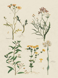 Fleurs Sauvages I Giclee Print by Maria Mendez