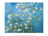 Branches of an Almond Tree in Bloom, 1890 Poster von Vincent van Gogh