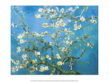 Branches of an Almond Tree in Bloom, 1890 ポスター : フィンセント・ファン・ゴッホ