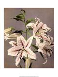 Star Gazer Lilies, Vintage Japanese Photography Art par Ogawa Kasamase