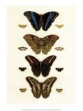 Blue Morphos Butterflies and Moths Plakater af Albertus Seba