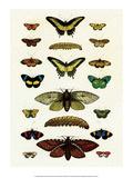 Butterflies, Moths and Caterpillar Plakat af Albertus Seba