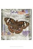Butterfly Artifact II Posters by Alan Hopfensperger