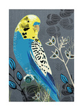 Budgie Reproduction procédé giclée par  Rocket 68