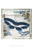 Butterfly Artifact III Art by Alan Hopfensperger