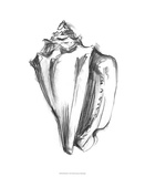 Shell Sketch I Giclee Print by Ethan Harper